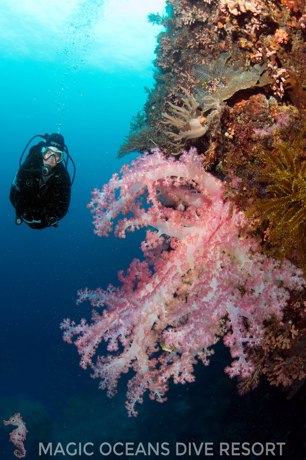 Magic oceans dive resort diving world duikvakanties - Magic oceans dive resort ...