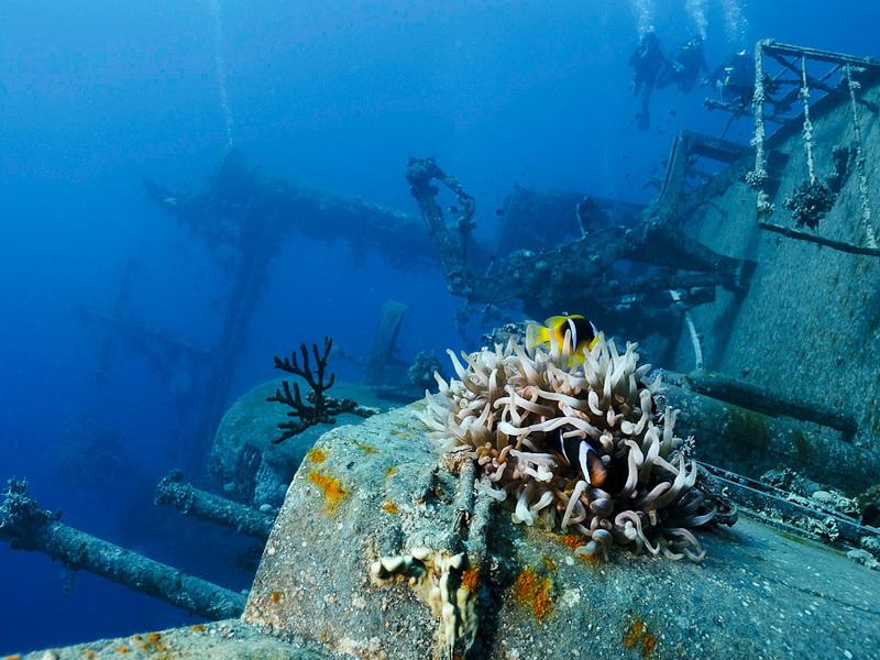 Duikvakantie aqaba diving world duikvakanties for Aqaba dive