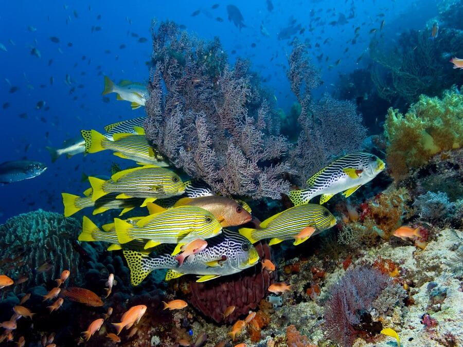 http://www.divingworld.nl/assets/images/UW_Rode_Zee070.jpg