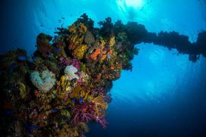 Liveaboard Routes Micronesia