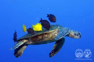 Liveaboard Routes Hawaii