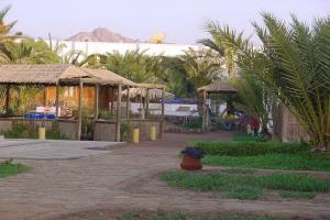Dolphin Camp Dahab & Nesima Diving Center