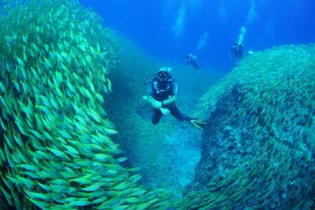 Divers Lodge Anse Norwa Diving World Duikvakanties