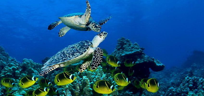 Liveaboard Route Safaga Diving World Duikvakanties